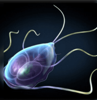 paraziták, amelyek élhetnek az emberi test kezelésében)