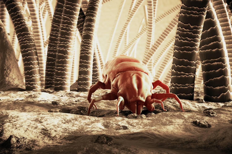 A paraziták tisztításának legjobb és legbiztonságosabb módja