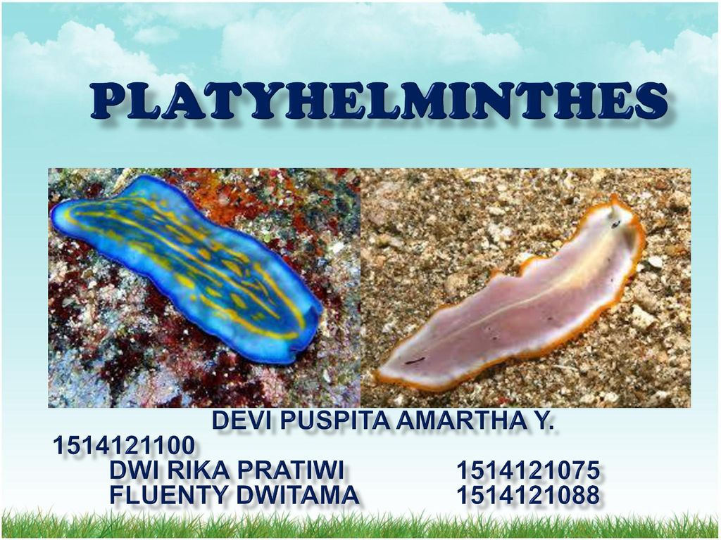 platyhelminthes ppt kelas x