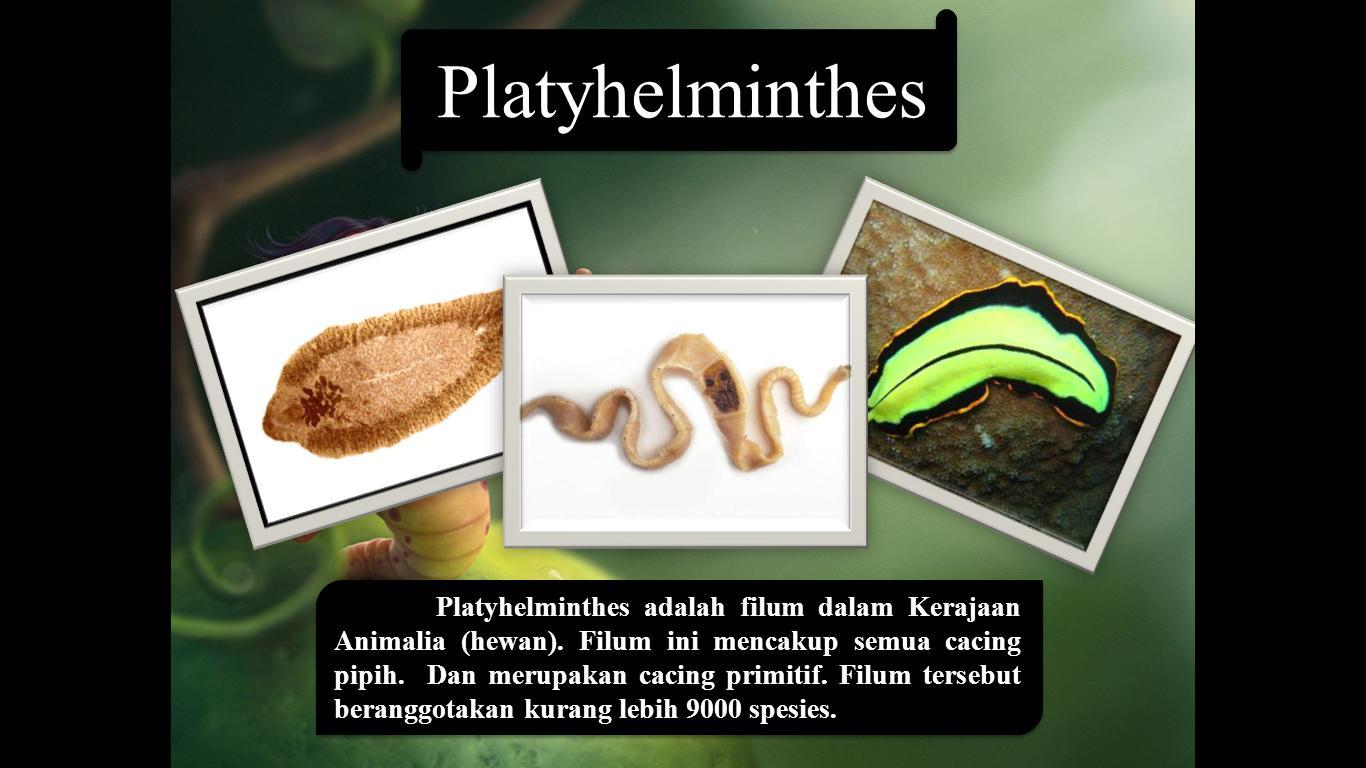 platyhelminthes ppt kelas x