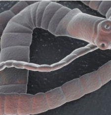 Paraziták - a te beledben is? - brutális képek! - Blikk Rúzs