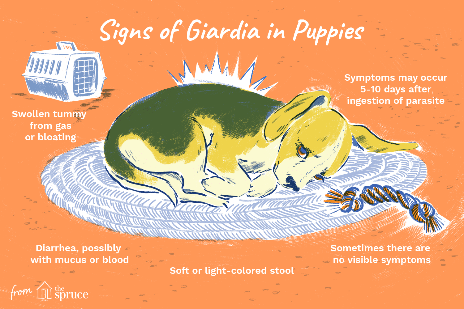 giardia symptoms in babies)