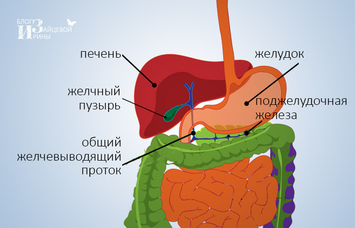 a kerekférgek kezelésének megelőzése)