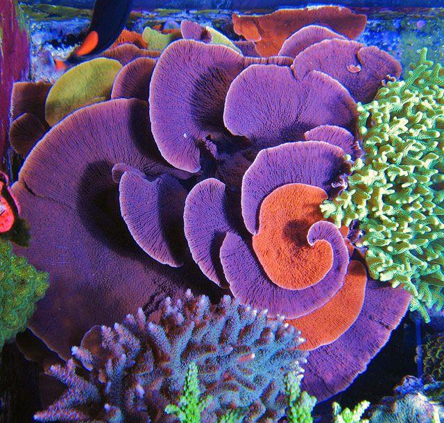 tengeri aschelminthes horogféreg)