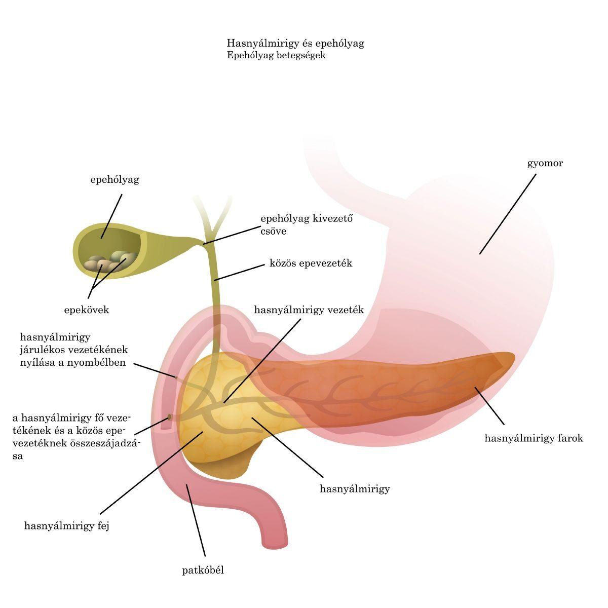 paraziták emberben gyomor tünetei