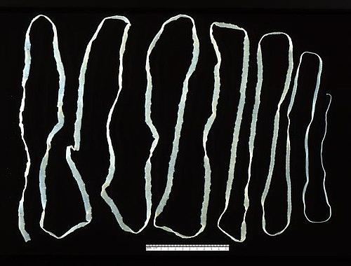 Daday Jenő ( ): Monographie systématique des Phyllopodes conchostracés revideált irodalomjegyzéke