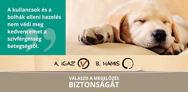 I. OSZTÁLY: FONÁLFÉRGEK (NEMATODA RUD.)   Brehm: Állatok világa   Kézikönyvtár