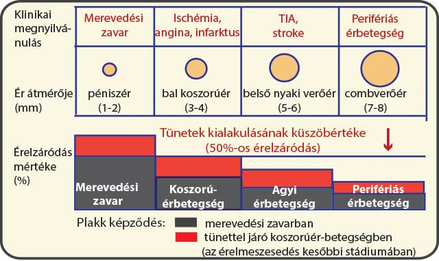 az aszcariasis klinikai megnyilvánulása)