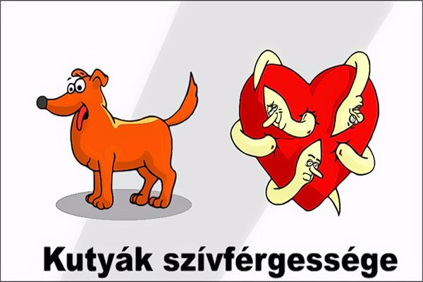 Szívférgesség | dr. Mérő Gábor állatorvos