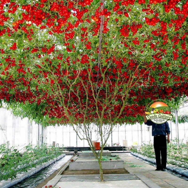 Érzékeny (Mimosa Pudica), Érintésre Érzékeny 💫 A Helyszín A Gyakorlati Kertészeti.