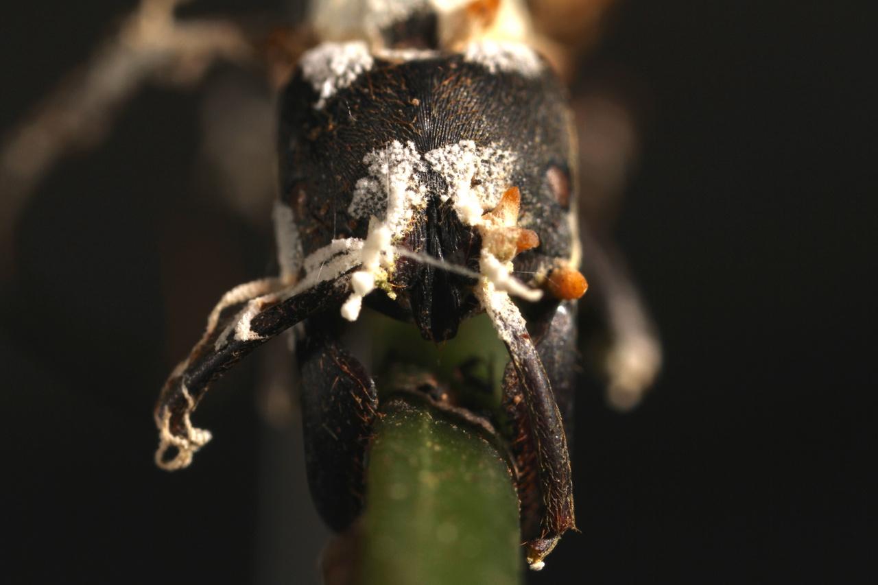 paraziták irányítják az agyadat kerekféreg felnőttek étkeznek