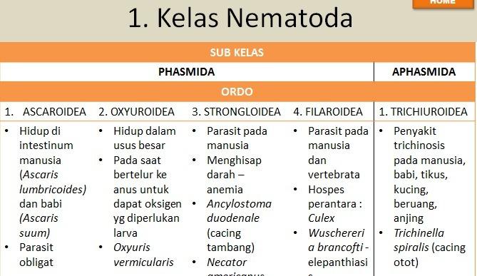 kelas dalam nemathelminthes
