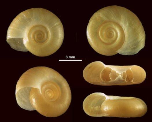 Paraziták a szervezetünkben: mikor gyanakodjunk? - HáziPatika