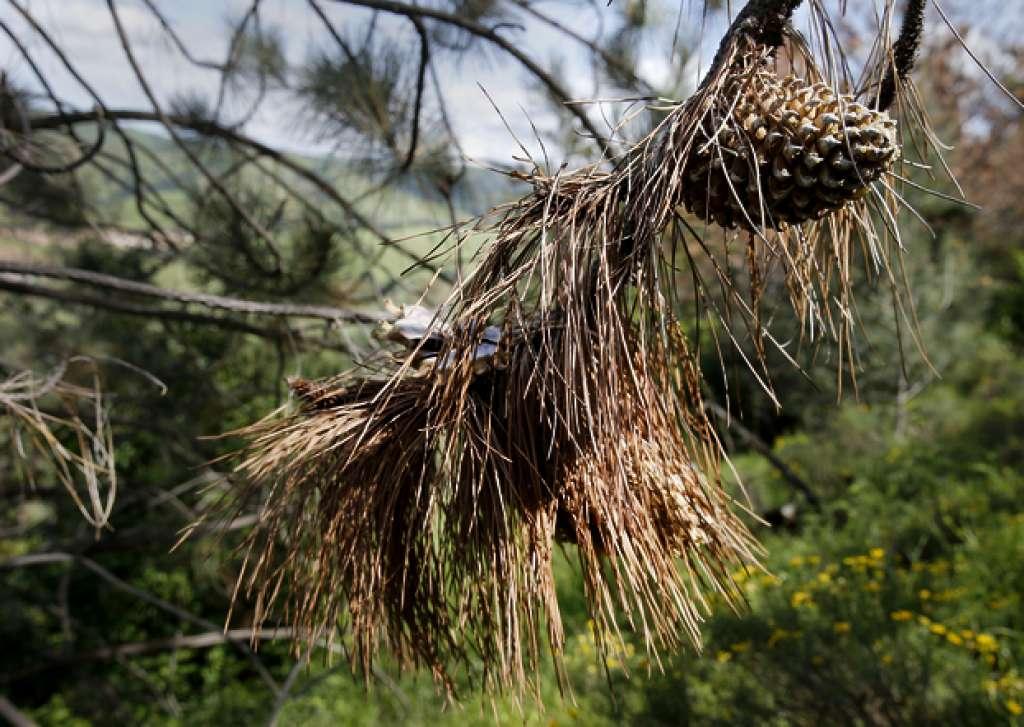 a féregférgek férgekből származnak