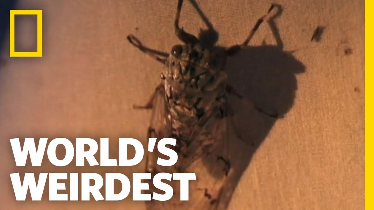 paraziták a bőr alatt az emberek kezelése