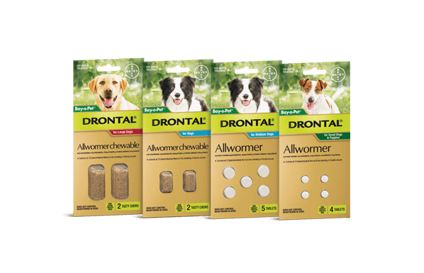 does drontal plus treat giardia