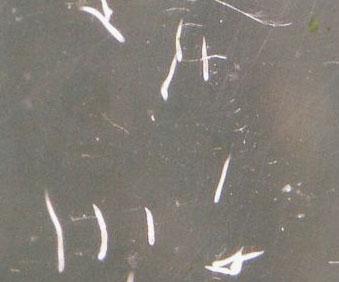 akvariumi férgek)