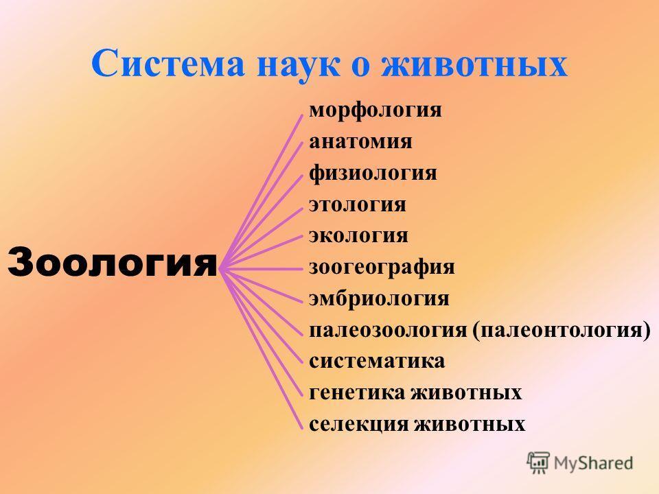 aszcariasis fejlődési ciklus tünetei)