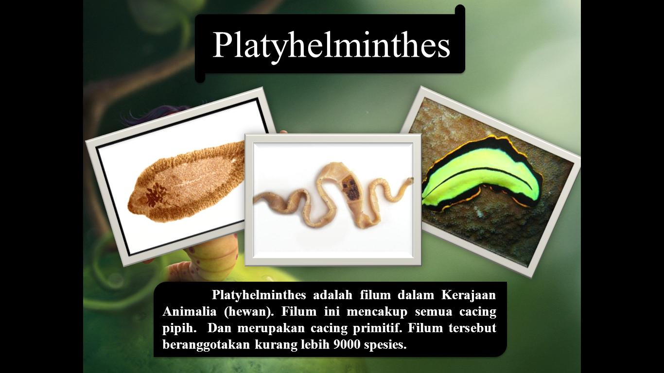 platyhelminthes dan nemathelminthes ppt)