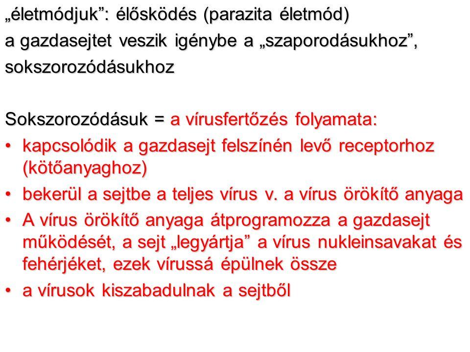 baktériumvírusok és paraziták által okozott fertőzések parazita gyógyszer emberre 1