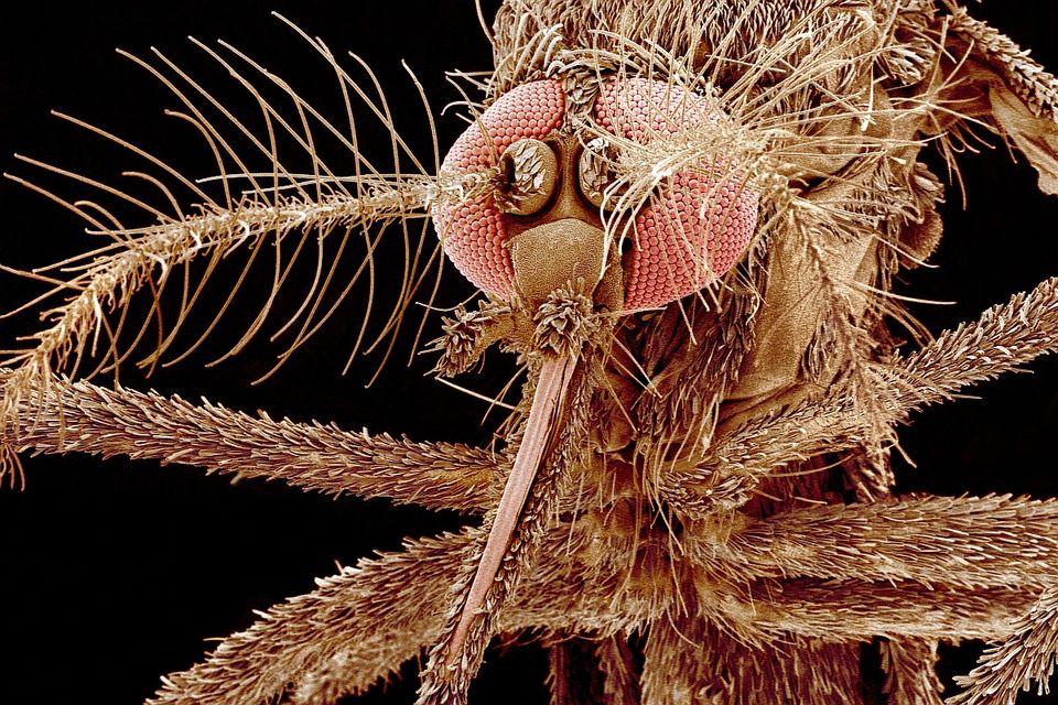 allergiát okozó férgek