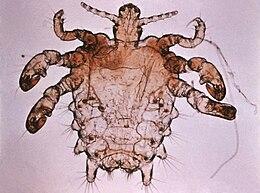 bőr alatti paraziták hogyan kell kezelni)