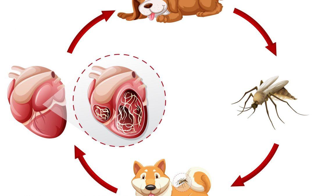 meggátolja a kezelését rajzfilm parazita