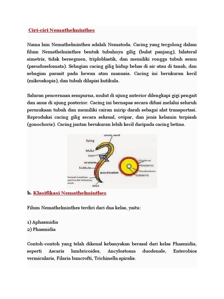 PLATYHELMINTHES. Dugesia tigrina. A. Karakteristik - PDF Free Download