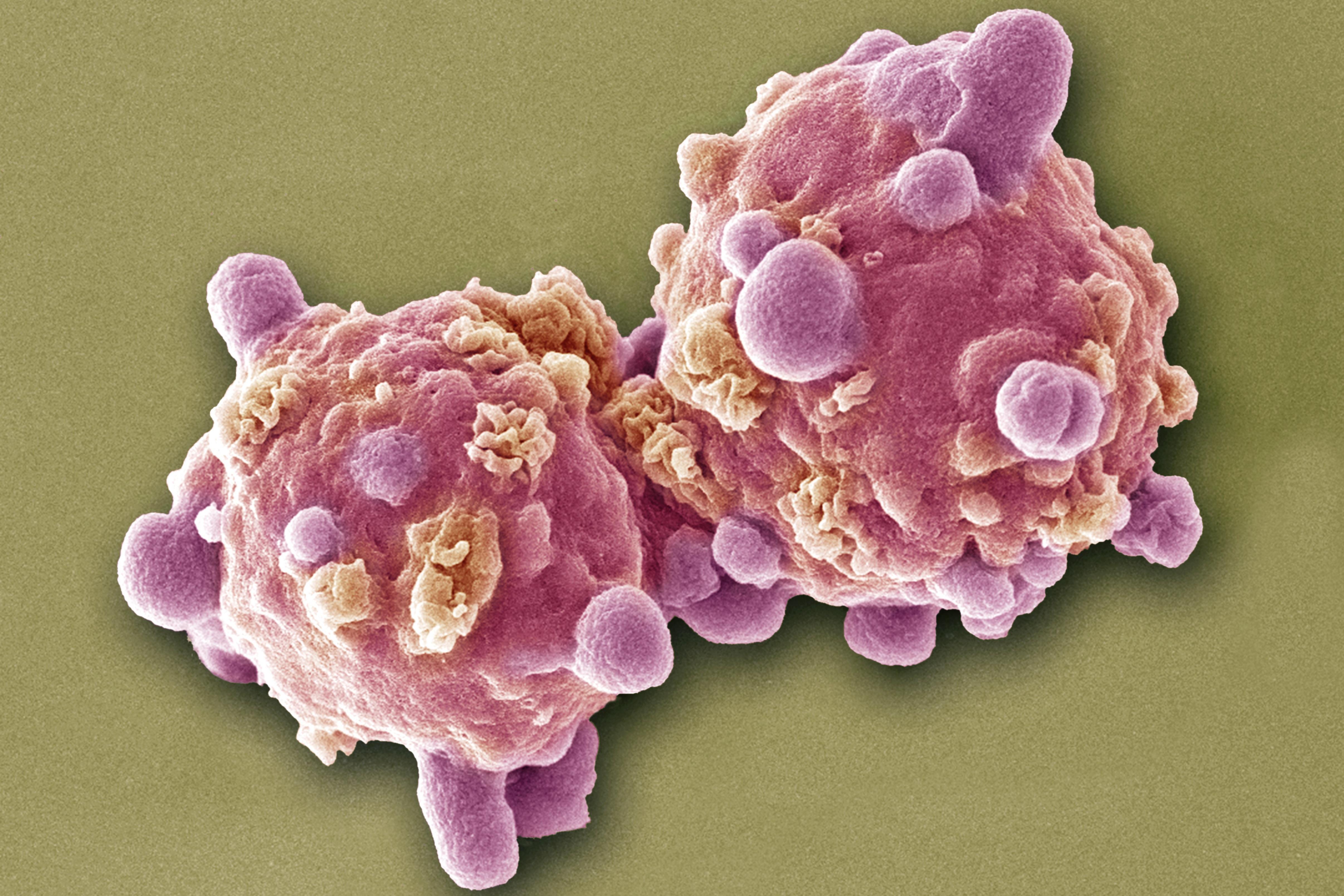 Intochicus parazita gyógyszeres kezelés)