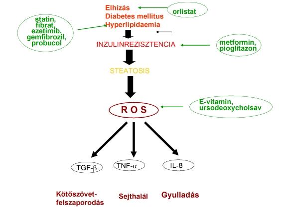 Giardiasis etiológiája, patogenezis, klinika, diagnózis, kezelés, megelőzés