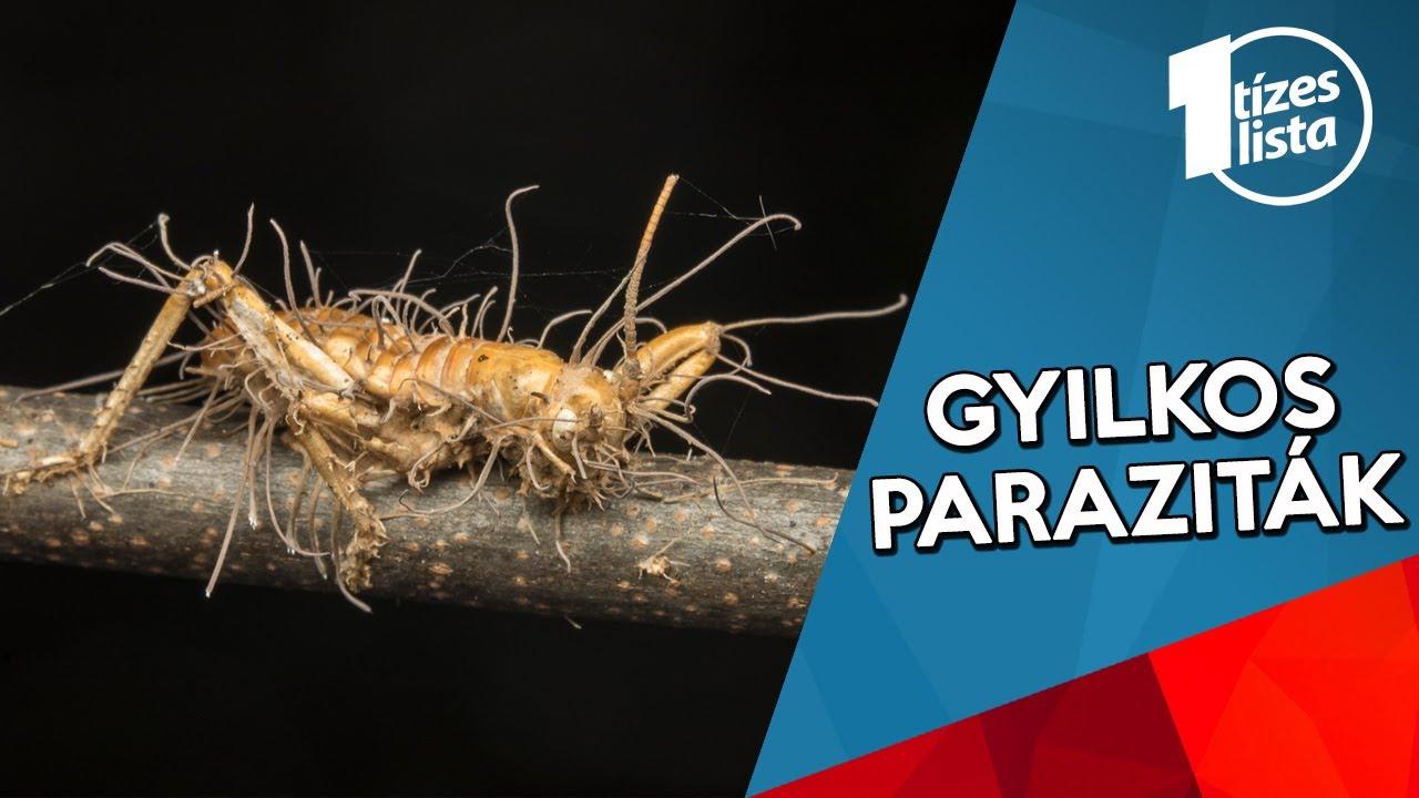 a férgek fajai paraziták)