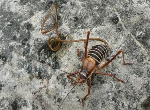 meztelen csigák paraziták