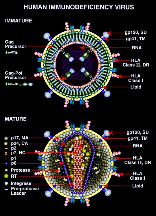 az emberek protozoánok elleni gyógyszerei