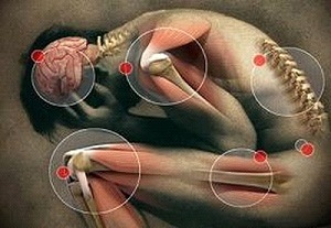 emberi belfereg jelei verme giardia em bebe