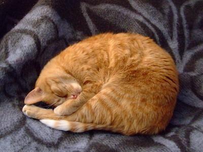 giardia gatos diarrea