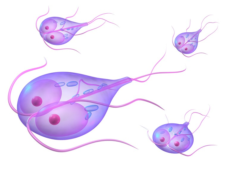 giardia and early pregnancy)