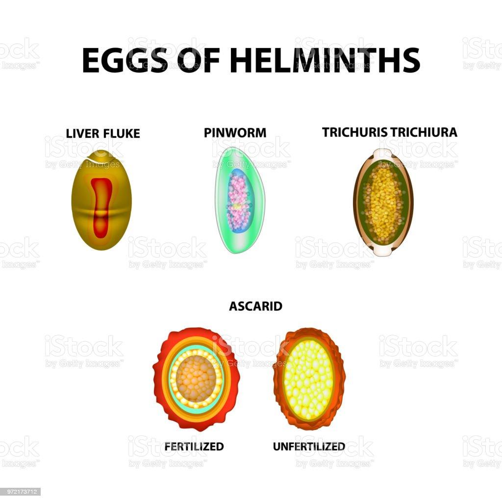 helminth széklet kutatási módszerek cysticercoid törpe szalagféreg