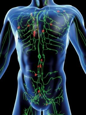 Index - Tudomány - Mennyi vér van az emberi testben?