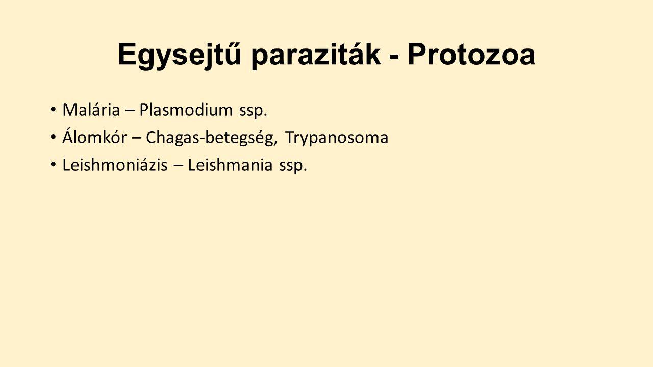 férgek és protozoák