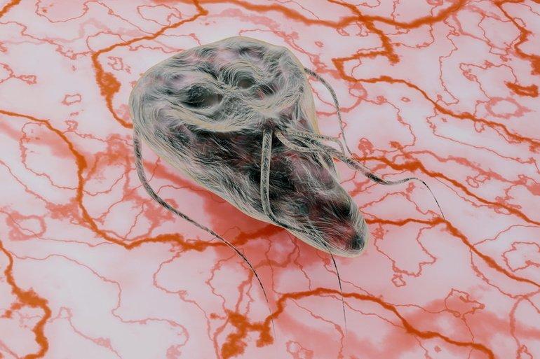 a szívférgesség megelőzése dr oz paraziták a gyomorban