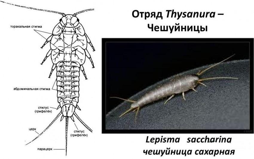 élethű ostrovsky tisztítás a parazitáktól férgek köhögése felnőttek kezelésében