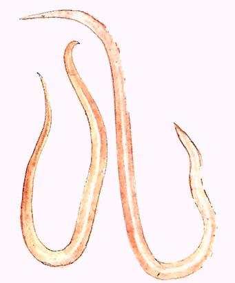 Paraziták kezelési komplexe