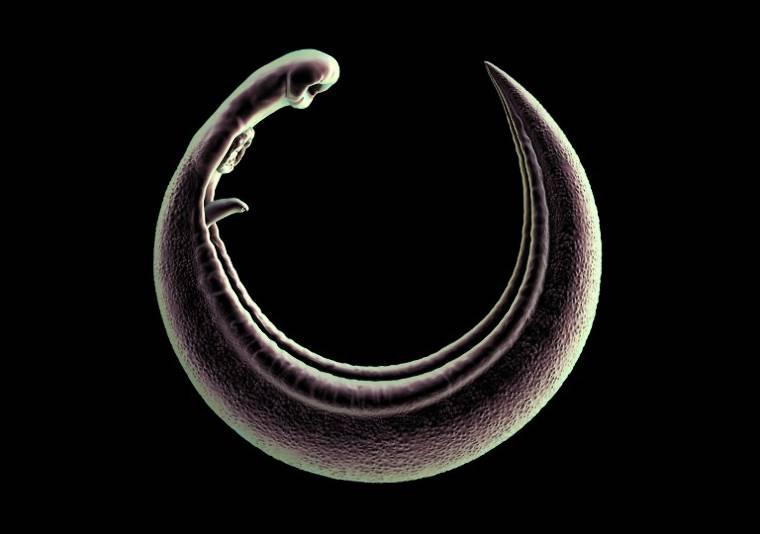 paraziták gyomorkezelésben