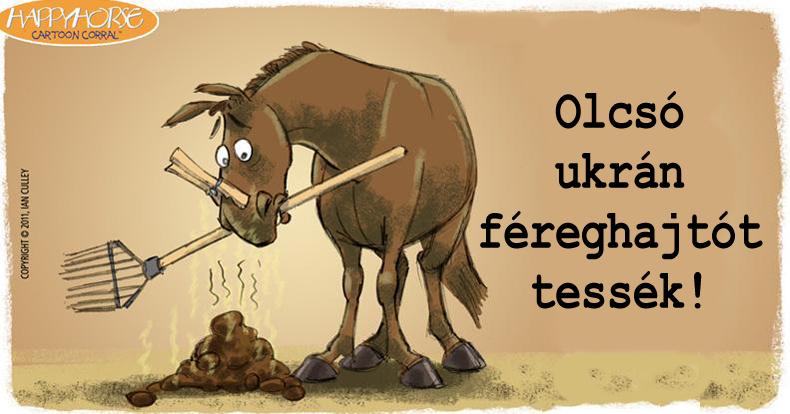 Galandféreg lovakban?