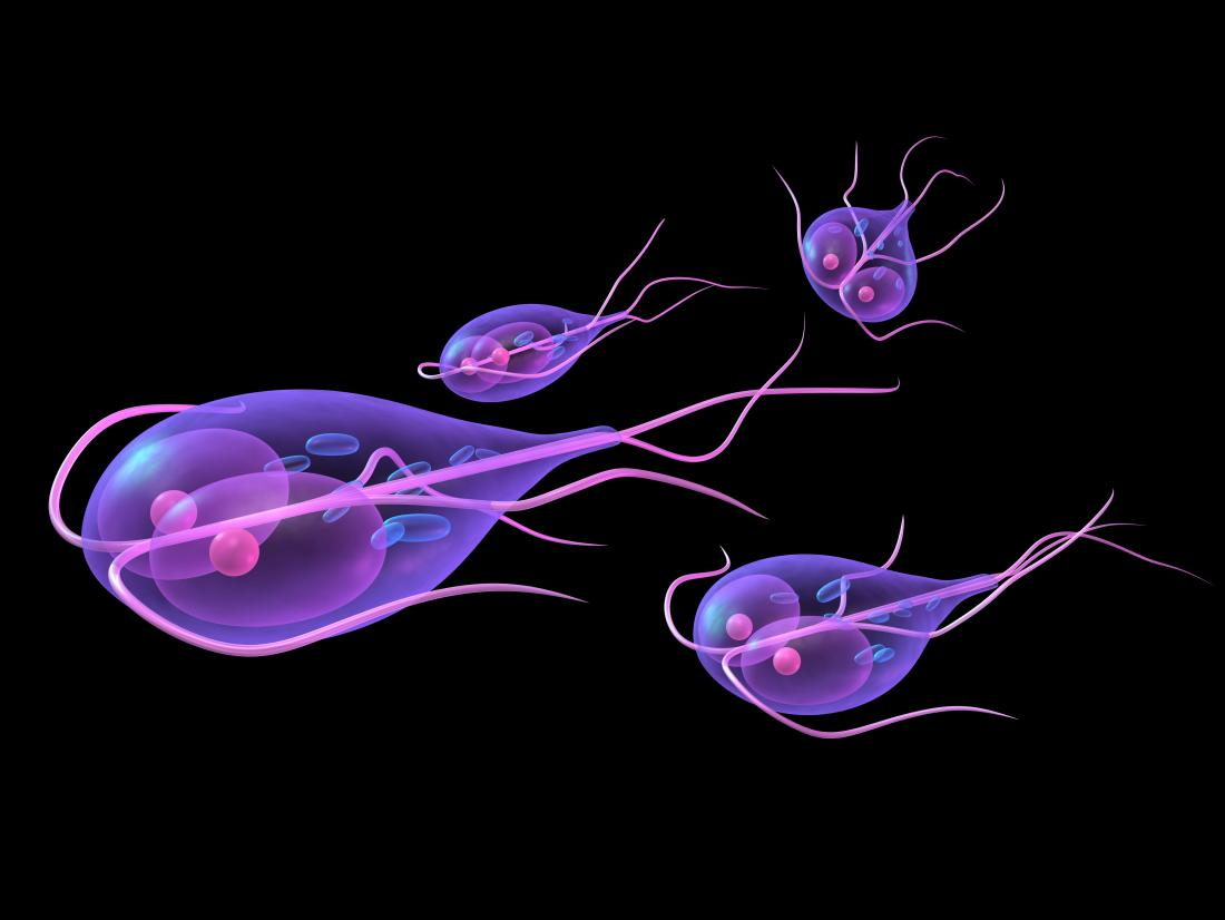 giardia parasite uk)