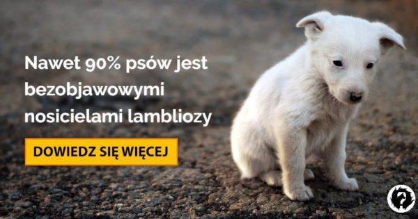 giardia u psa metronidazol)