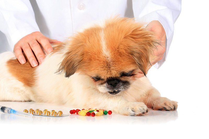 giardia u psow leczenie