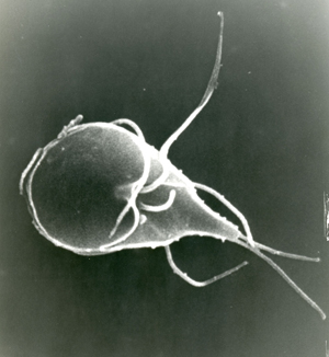 giardia worms