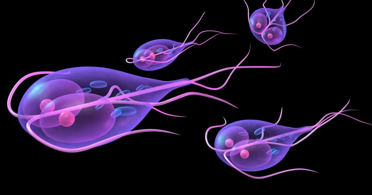 giardia yeast infection)