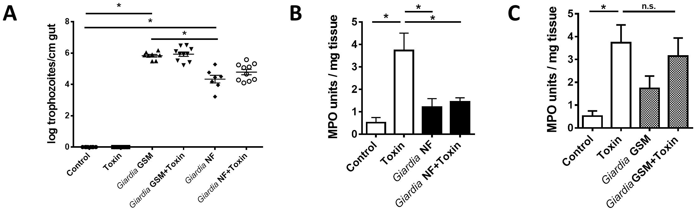 giardiasis toxin production